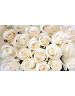 """Фотообои 3D """"Нежные белые розы"""", песок, 4х2,5м"""